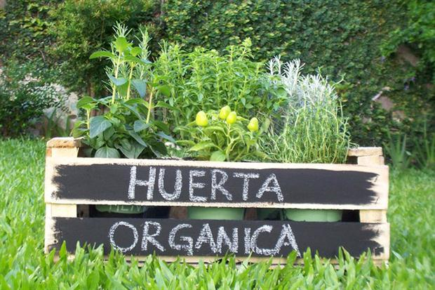 Seis claves para armar tu huerta en macetas for Huerta de aromaticas en macetas