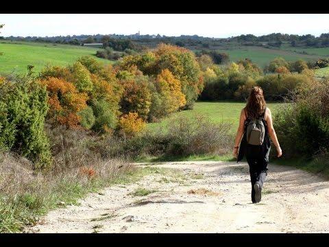 Caminar en la naturaleza previene y cura la depresión